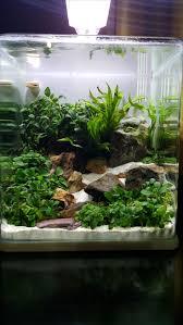 idee deco aquarium best 25 nano aquarium ideas on pinterest freshwater aquarium