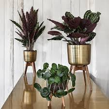 my top 10 mid century planters interior trends making spaces