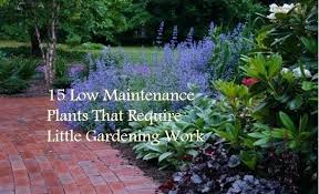 Maintenance Free Garden Ideas Low Maintenance Front Garden Ideas Low Maintenance Plants That