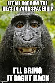 Meme Monkey - monkey selfie meme generator imgflip