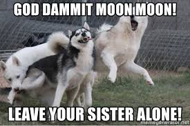 Moon Moon Meme - god dammit moon moon leave your sister alone why moon moon