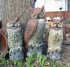 26 best holding school ideas images on lawn ornaments