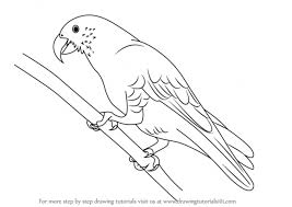 coloring pages parrot drawing images coloring pages parrot