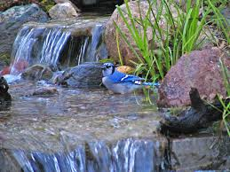 birds and waterfalls attracting wild birds with water features