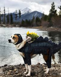 Colorado Traveling With Cats images Henry the colorado dog and adventure cat baloo jpg