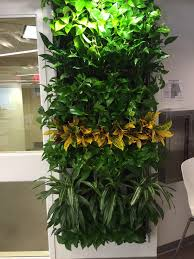 Low Light Flowering Plants by Office Plant Solutions For Limited Environments Pdi Plantscape