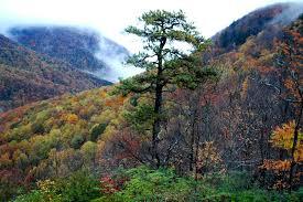 South Carolina mountains images South carolina on my mind state song 2 state symbols usa jpg