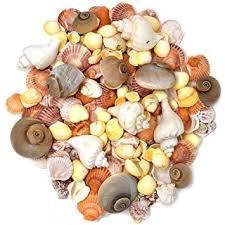 assorted seashells sea shells mixed seashells 200 shell in