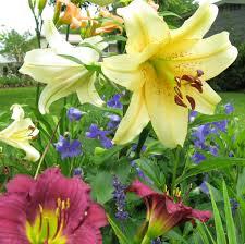 Lily Flower Garden - beautiful blooms in gayle u0027s garden in south carolina fine gardening