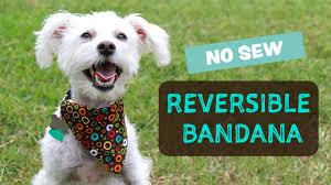 diy reversible bandana no sew bandana de perro