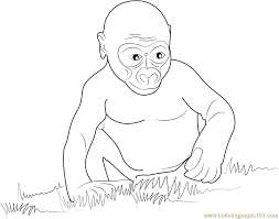 gorilla baby coloring free gorilla coloring pages