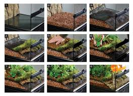 64 best crested gecko images on pinterest crested gecko reptile