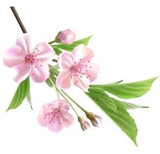 spring branch with pink tree flowers png clipart gallery