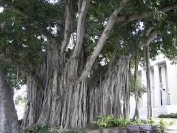 file banyan tree county courthouse jpg wikimedia commons