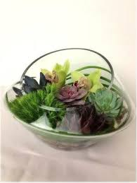 flower delivery chicago succulents flower delivery in chicago send succulents flowers in