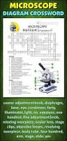 mitosis crossword with diagram editable student learning