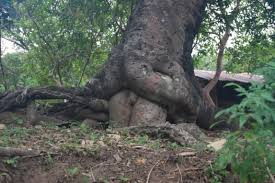 a collection of tree trees wonders and