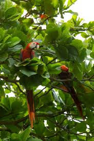 native plants of costa rica 99 best nature neighbors images on pinterest costa rica animals