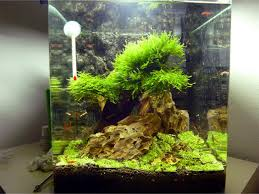 Aquascape Moss Will This Make A Good Moss Tree And Best Moss To Use Updated