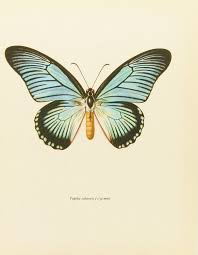 vintage butterfly print shabby chic home decor african blue