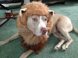 Vizsla Halloween Costume Animal Planet U0027s Lion Halloween Dog Costume Shipping