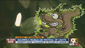 Zoo Lights Boston by Zoo Battles Squirrels Over Christmas Lights Youtube