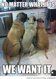 Dog Owner Meme - 20 hilarious dog memes