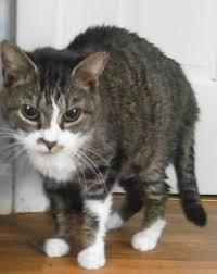Blind Cat Sanctuary Paws Ohio Special Needs Animals