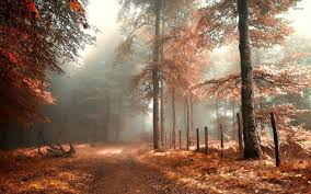 free fall wallpaper for computer huge autumn forest wallpapers 30 wallpapers u2013 hd wallpapers