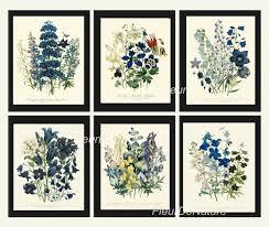 amazon com botanical print set 6 prints unframed antique