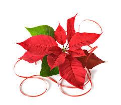 a christmas blessing u2026 trinity center