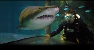 manly sea life sanctuary official site shark dive xtreme