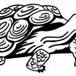 unbelievable baby turtle coloring pages pic outstanding