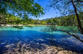 Slovenia Lake Slovenia Lake Jasna Nature Branches 6015x3975
