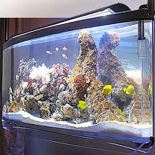 spacearium elliptical suspended aquariums the green
