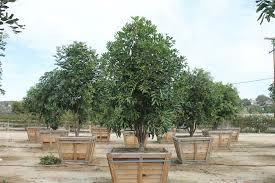 evergreen andmoni west coast tree brokers