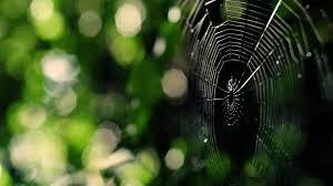 spider web 581741 walldevil