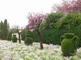 Bougainvillea Topiary - mallorca u2013 beyond the gardens path u2026