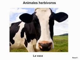 imagenes de animales carnivoros para imprimir maestra de primaria animales herbívoros vocabulario en imágenes