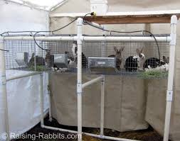 Rabbit Hutch For Multiple Rabbits Wooden Rabbit Cage Traditional Wood Hutch And Other Options