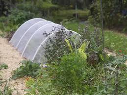 using row covers in the vegetable garden u2014 veggie gardening tips