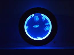 Jellyfish Home Decor by Orbit 20 U2014 Cubic Aquarium Systems