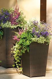 beautiful purple and pink mixed flowers in tall planters