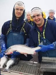 Alaska work and travel images H 2b alaska fishery united work and travel jpg