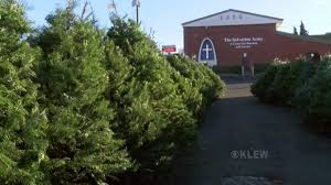 all saints tree sale has large selection of beautiful