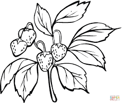 strawberry coloring pages free coloring pages