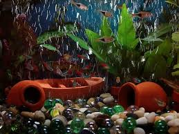 How To Clean Fish Tank Decorations Benefits And Drawbacks Of Rocks And Woods As Aquarium Decor