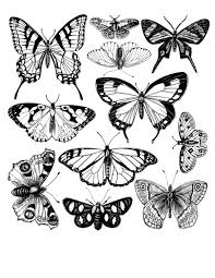 4 free coloring book page printables butterfly coloring