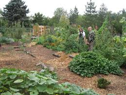 community swale and food forest project in an american back yard