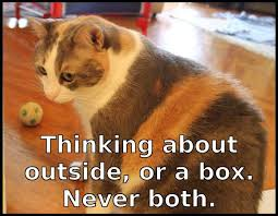 Thinking Cat Meme - thinking cat meme information